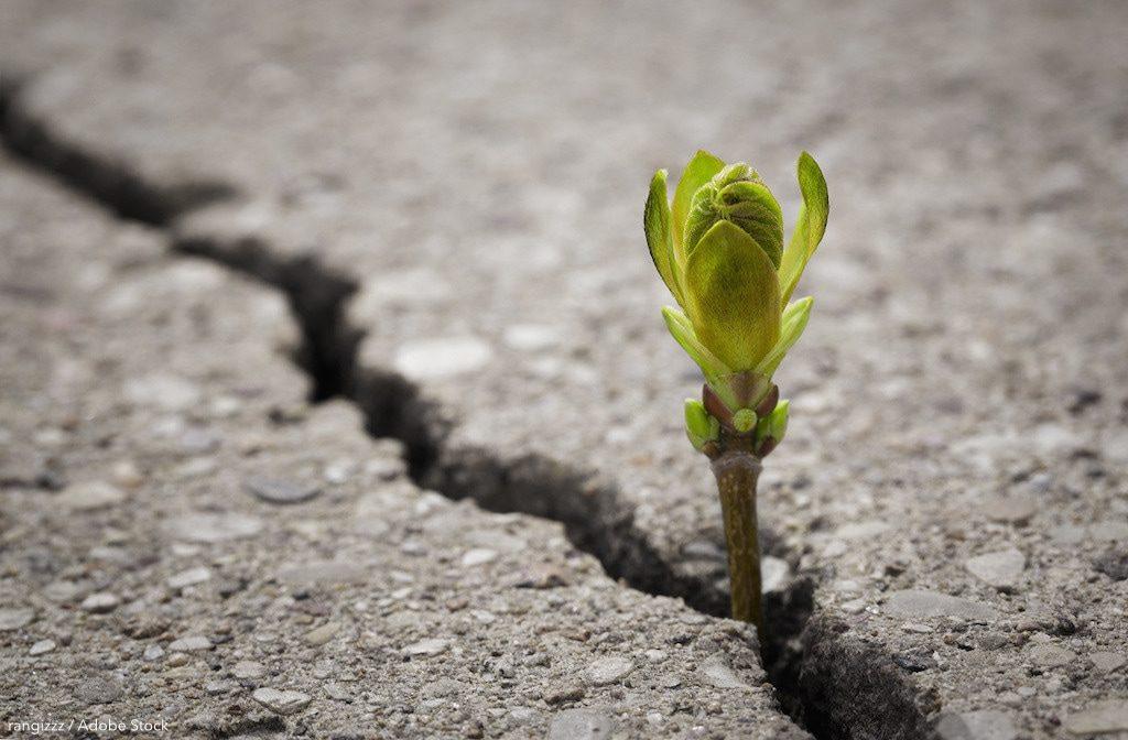 rangizz – Wachstum